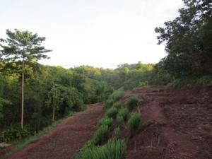 Paddy field terraces